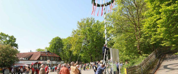Maibaum auftstellen am 1. Mai